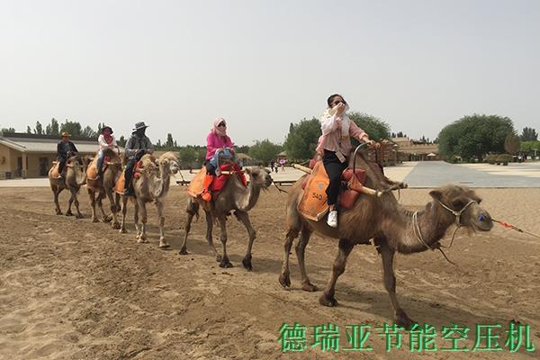 德瑞亚敦煌沙漠骑骆驼拓展