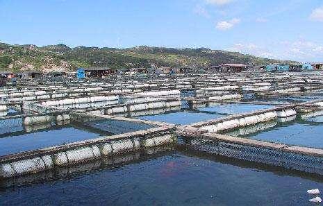 德瑞亚空压机助力淡水养殖,营造和谐水产市场